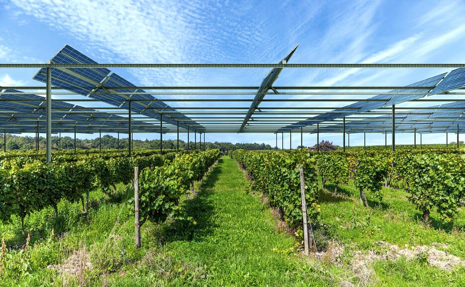 painéis fotovoltaicos em cima de vinha - França