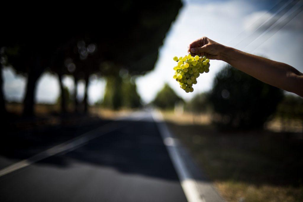 Tejo Wine Route 118